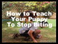 How to Teach Your Puppy Not to Bite