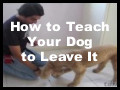 How to Teach Your Dog to