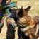 Heroic Dog Gave His Life To Save His Comrades