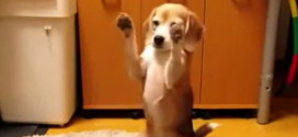 Dog Catching A Ball With His Paws