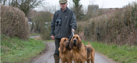 Bloodhounds, The Large Deer Hunters