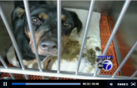 deplorable_conditions_at_NYC_animal_control