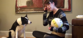 Teach your dog to roll a ball with his nose.