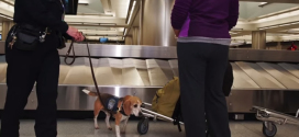 This pooch helps reunite people with their belongings