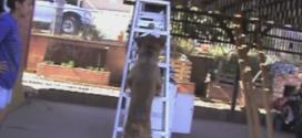 Teach your dog to climb a ladder