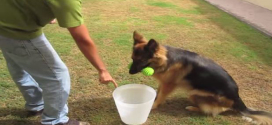 Teach your dog to pick up an object and clean up