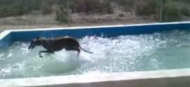 What fun this greyhound is having!
