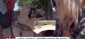 These 2 disabled dogs have each other, and now they have a fureverhome