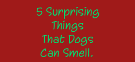 5 Surprising Things That Dogs Can Smell.