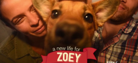 Zoey was rescued along with 59 other dogs from a hoarder