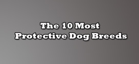 The 10 Most Protective Dog Breeds