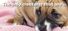 The only creatures that are