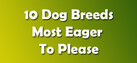 10 Dog Breeds Most Eager To Please