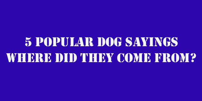 a doggy dog urban dictionary