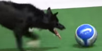 soccerdog