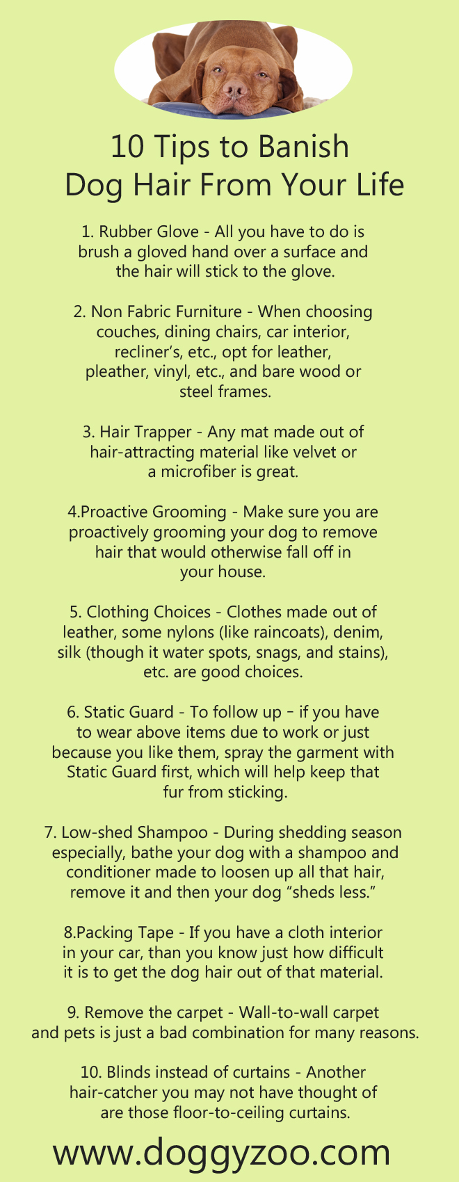 10 Tips To Banish Dog Hair From Your Life Doggyzoo
