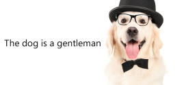 The dog is a gentleman