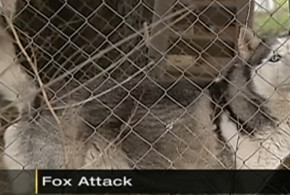 This dog sacrificed himself to save a child from a rabid fox