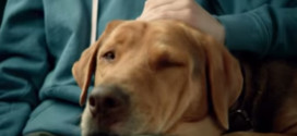 This movie helped 250 dogs get adopted.