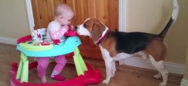 Baby meets rescue dog…how cute!