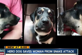 Guinness saved his mom from a snake attack