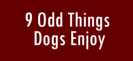 9 Odd Things Dogs Enjoy