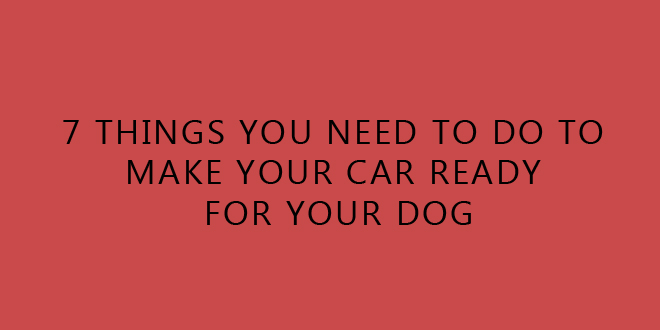 how to make your dog relax in the car