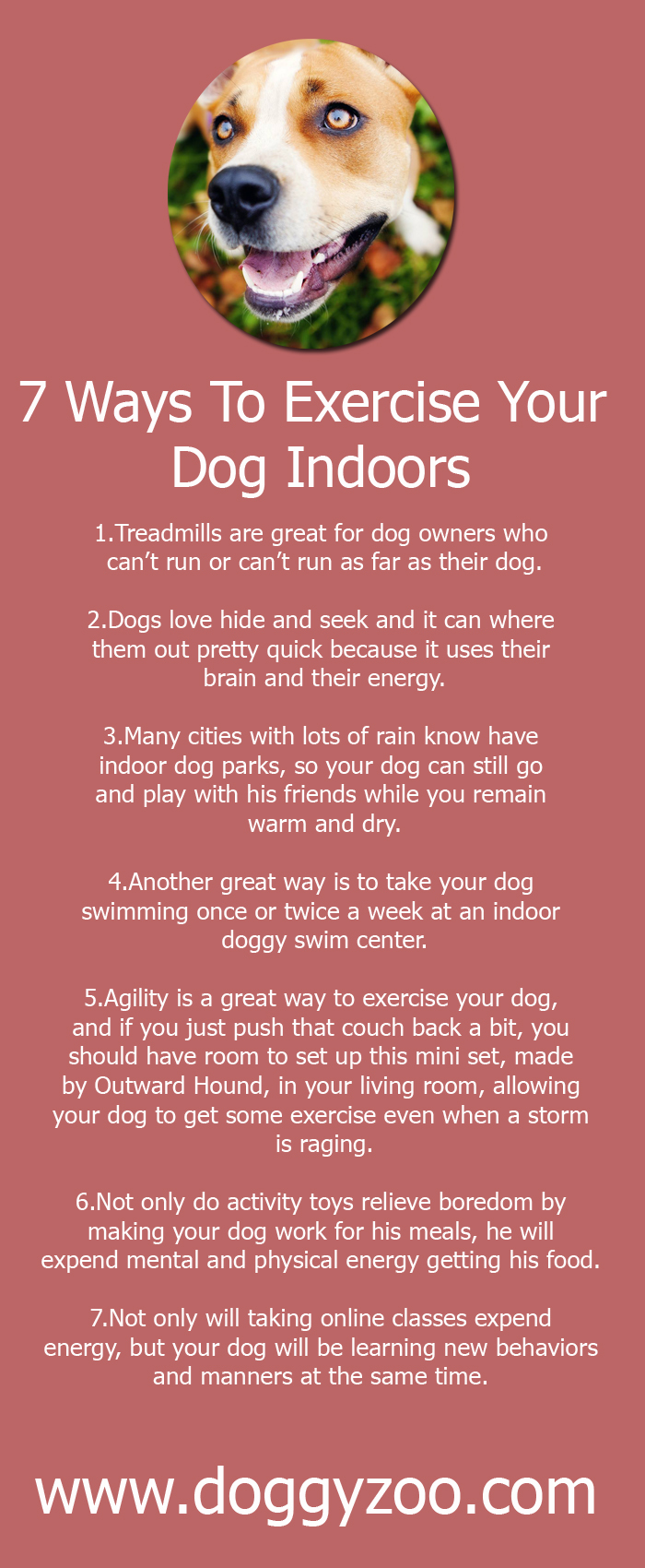 7 Ways To Exercise Your Dog Indoors