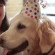 Celebration of a Hero Dog…with a dream birthday party!!