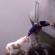 Amazing dog rescues
