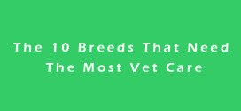 The 10 Breeds That Need The Most Vet Care