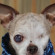 Former puppy mill dog Harley raises money and awareness of puppy mills