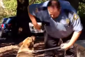 9-year-old Ethan is a hero to these hero dogs!