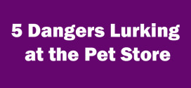 5 Dangers Lurking at the Pet Store