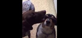 Dog trick gone awry