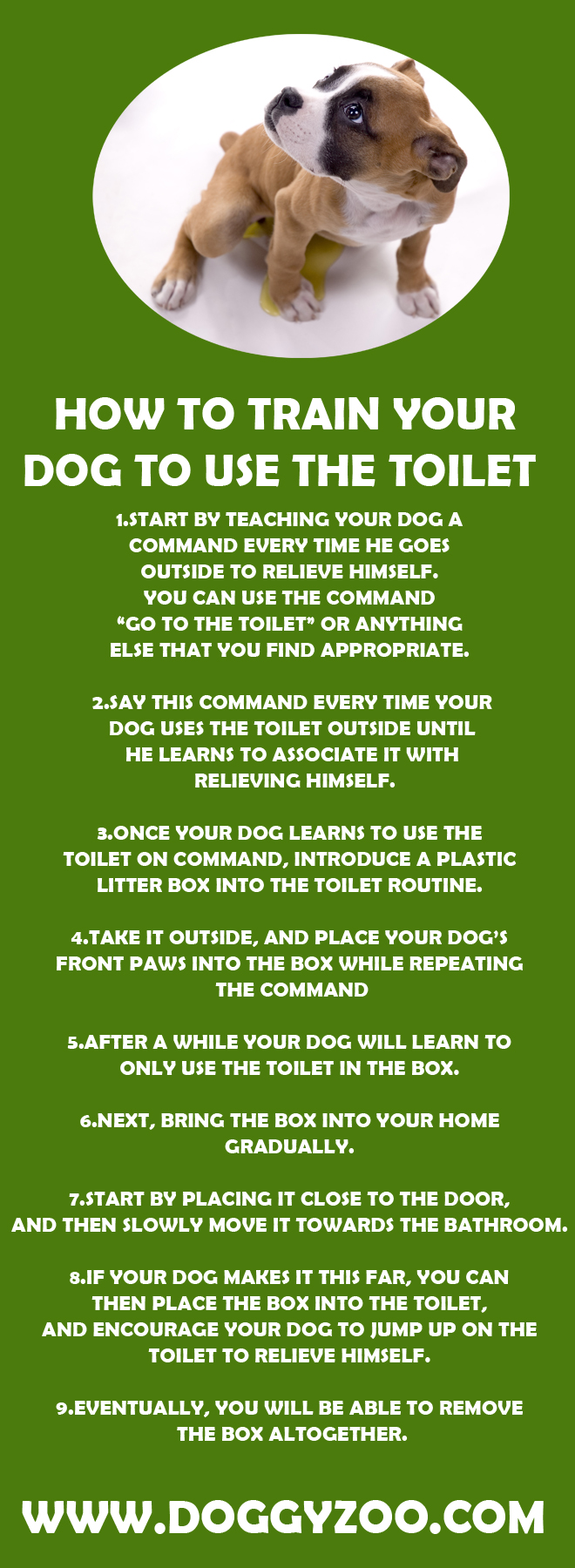 How To Train Your Dog To Use The Bathroom Outside 28 Images How To Train Your Dog To Attack