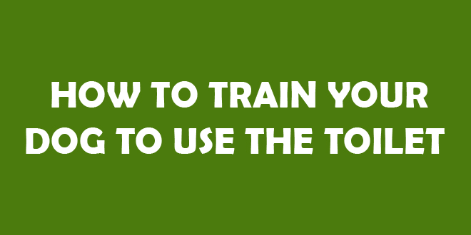 How To Train Dog To Go Toilet Outside