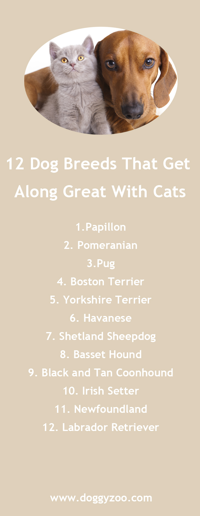 how to train cat and dogs to get along