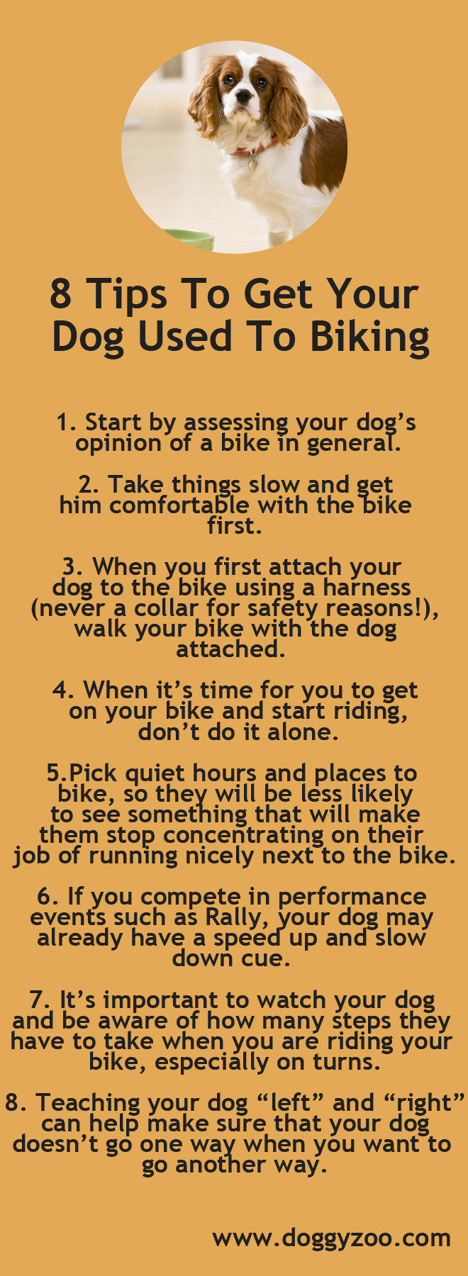 8 Tips To Get Your Dog Used To Biking Doggyzoo