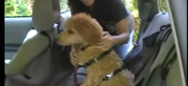 2 safe and inexpensive ways to harness your dog in a car