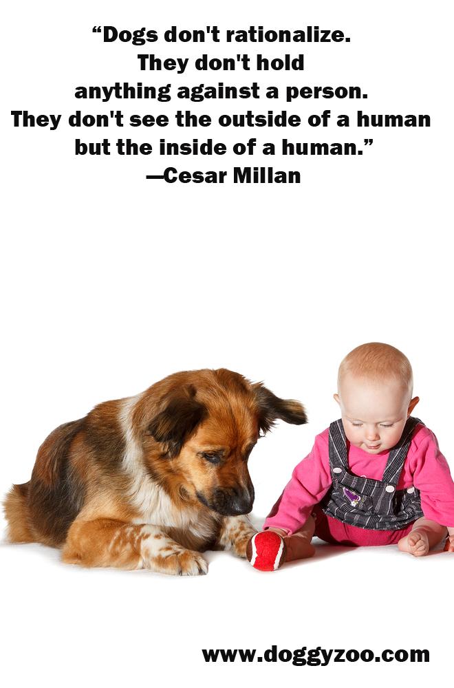 Dogs don't rationalize. - DoggyZoo.comDoggyZoo.com