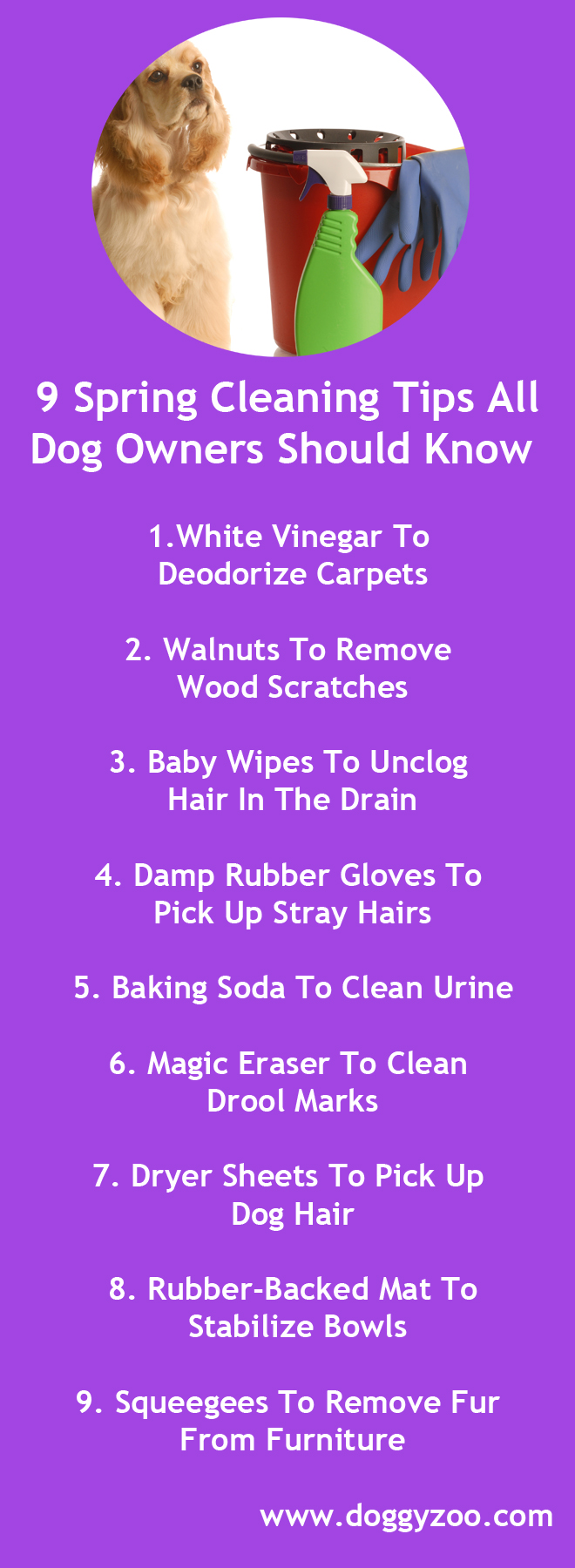 9 Spring Cleaning Tips All Dog Owners Should Know