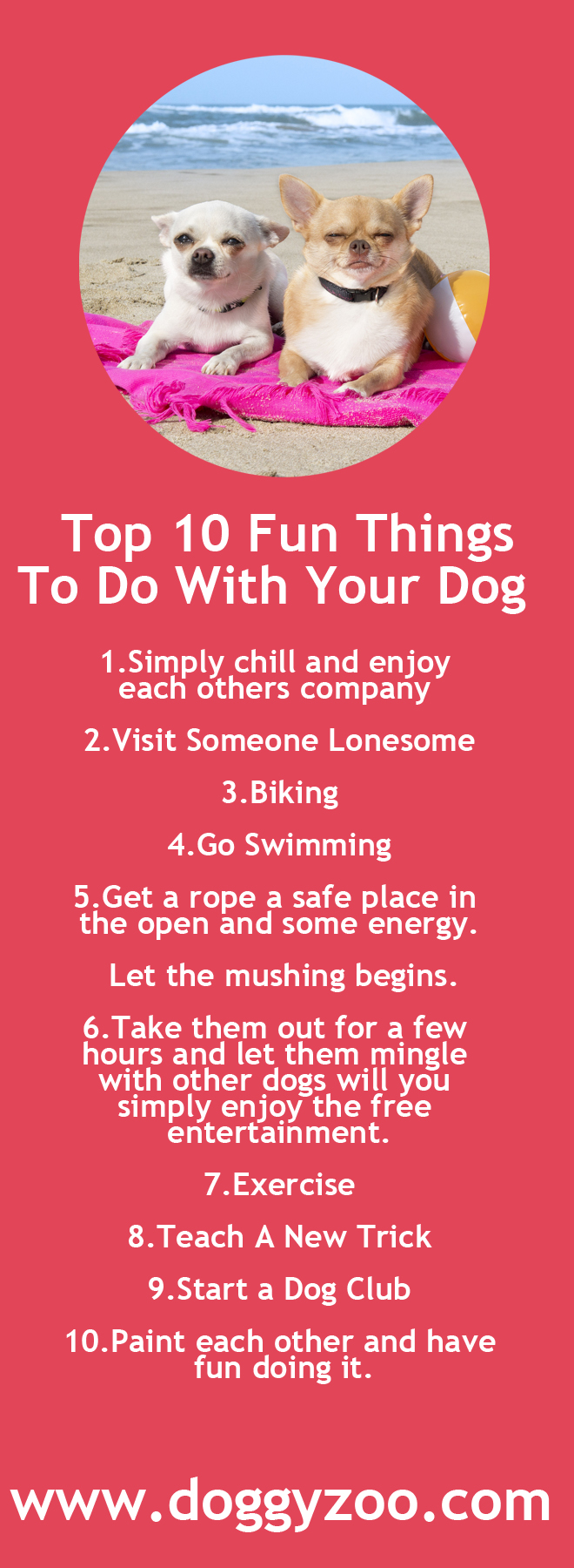 10 Fun Things To Do: Top 10 Fun Things To Do With Your Dog