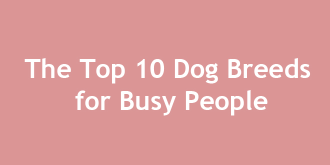 The Top 10 Dog Breeds for Busy People | DoggyZoo.com