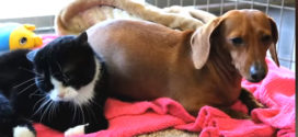 This abandoned dog and paralyzed cat saved each other!